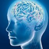 """""""La investigación del cerebro. Implicaciones para la prevención y justicia penal"""""""