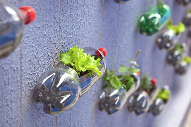Upcycling-Plastic-Soda-Bottles-As-An-Urban-Garden-8